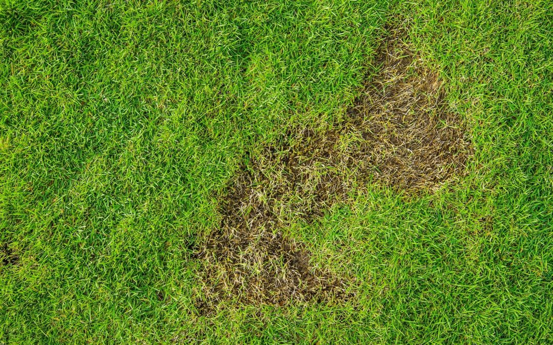 Purge Lawn Pests with the Help of Your Artificial Grass Installer in Santa Rosa