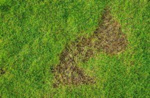 Purge Lawn